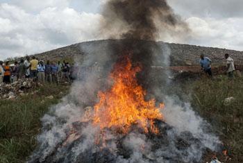 Уничтожение марихуаны в Либерии. Фото ООН