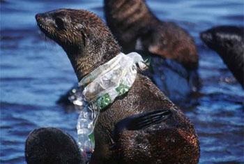 Опасность пластика в океане. Фото ЮНЕП