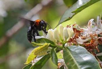 Пчелы. Фото ФАО