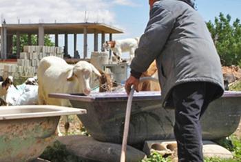 Cирийские фермеры. Фото ФАО