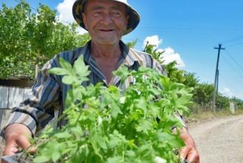 Фермерское хозяйство в Грузии. Фото ПРООН в Грузии