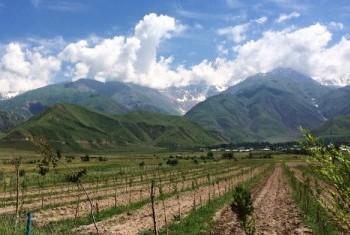 Пять учреждений системы ООН решили объединить усилия и изменить жизнь в Раштской долине Таджикистана. Фото ООН