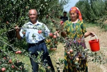 Фермерское хозяйство в Узбекистане. Фото ФАО/Р.Шагаев