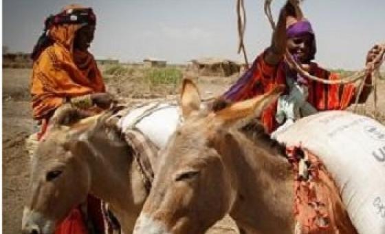 Mengi yanahitaji kufanywa katika jamii zilizoathirika na El nino kulingana na wataalamu.(Picha:WFP/Michael Tewelde)