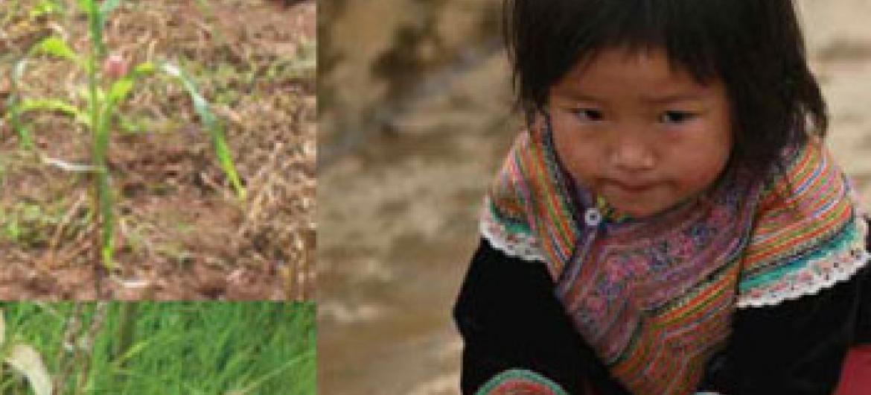 Picha@UNICEF(UN News Centre)