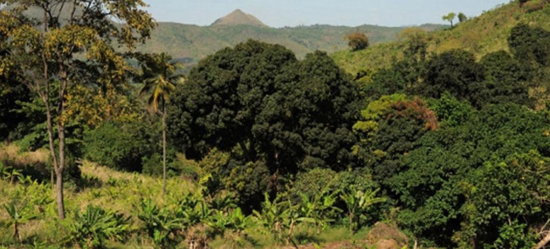 Kilimo, misitu na shughuli nyingine za matumizi ya ardhi hutoa tani zaidi ya bilioni 10 za gesi chafuzi. Picha: FAO / Daniel Hayduk