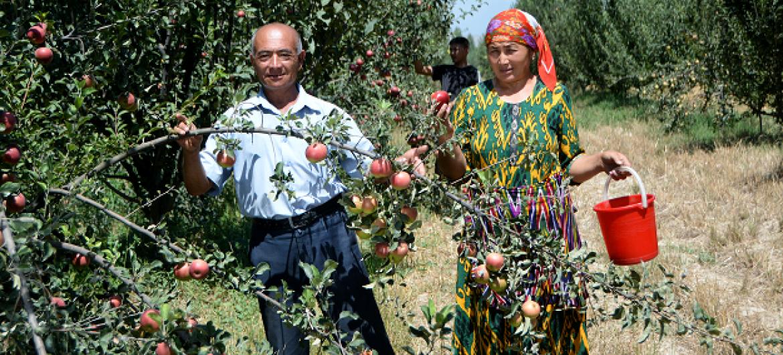 Wakulima Uzbekistan. Picha: FAO