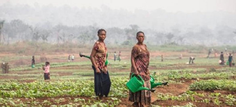 Wakulima nchini DRC wamwagilia maji mimea. Picha: FAO