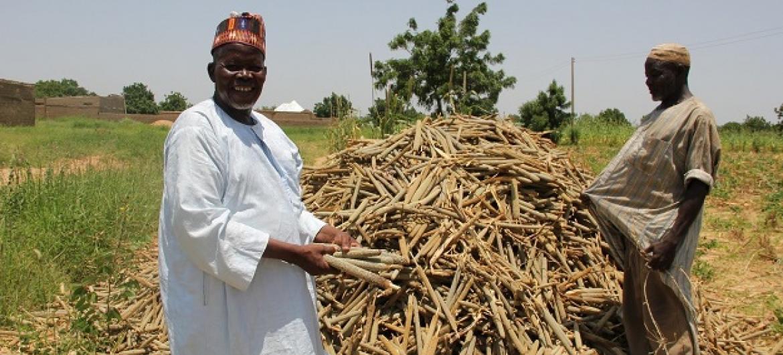 Wakulima Nigeria wajivunia mazao(Mtama)ya shamba lao.Picha: FAO