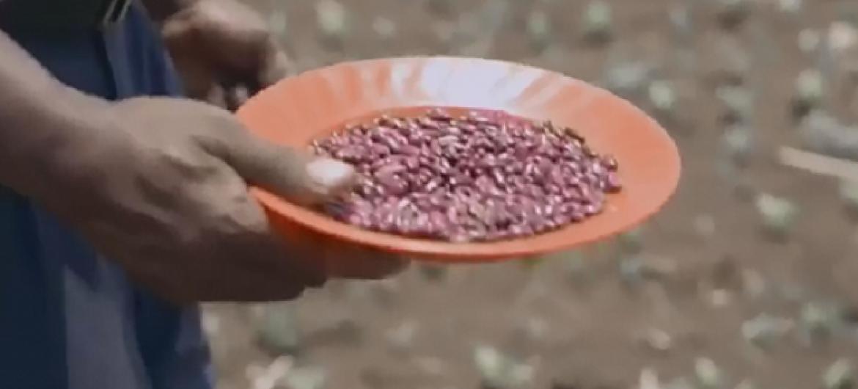 Mkulima akipanda maharage nchini Uganda.