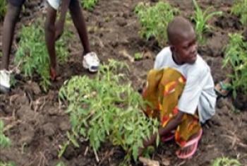 Kilimo cha kaya ni msingi wa maendeleo siyo tu ya jamii bali taifa na dunia kwa ujumla.(Picha:FAO)