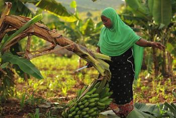 Kuwezesha wakulima vijijini kutasaidia kuinua kipato cha wakazi wa maeneo hayo na kuondoa tofauti kati ya mijini na vijijini. (Picha@FAO-Tanzania)