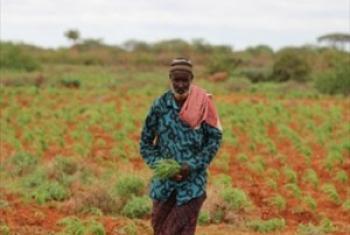 mkulima Somalia: Picha ya FAO