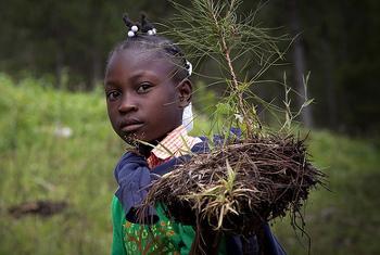 upandaji wa miti Haiti @