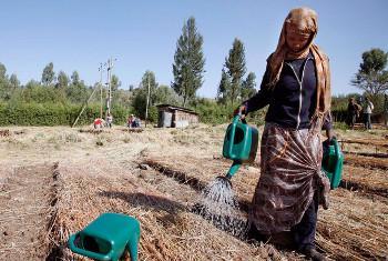 Mwanamke akinywesha miche katika eneo la Ziwa Tana, eneo la Ahara, Ethiopia. Picha: IFAD / Petterik Wiggers(UN News Centre)