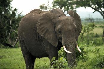 Mbuga la wanyama la kitaifa la Mikumi nchini Tanzania.(Picha ya UM/NICA:149108)