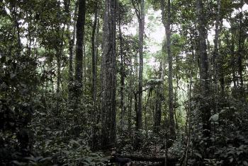Misitu(Picha ya UM/Pernaca Sudhakaran)