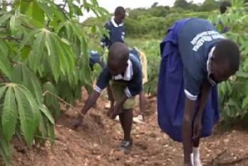 Wanafunzi wa shule ya msingi Rusumo Magereza mkoani Kagera wakiwa shambani wanakojifunza kilimo kinachojali mazingira. (Picha:FAO-Video capture)