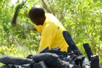 Ukataji miti kwa ajili ya mkaa.(Picha:World Bank/video capture)