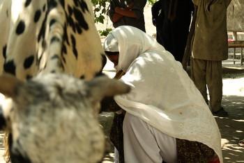Mfugaji nchini Afghanistan.(Picha©IFAD/Melissa Preen)