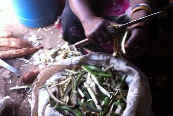 Maganda ya ndizi ambayo sasa yemepata soko kwa wanaotengeneza mkaa.(Picha:Idhaa ya kiswahili/J.Kibego)