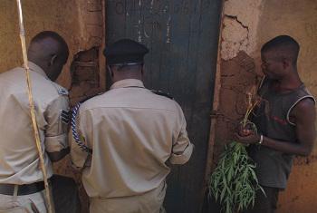 Polisi wakifanya upelelezi katika nyumba ya mtu anayedaiwa kulima na kuuza bangi mjini Hoima, Uganda.(Picha:Idhaa ya Kiswahili/J.Kibego)