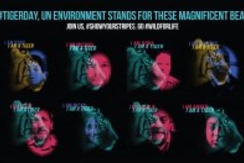 Siku ya kimataifa ya chui:Picha na UNEP