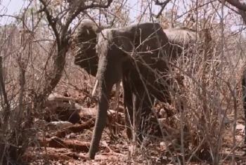 Wanyama wa piri katika eneo la utalii barani Africa. Picha: UM