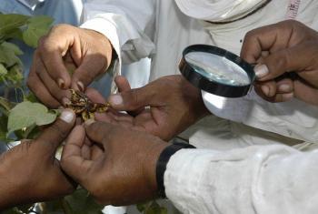 FAO na UNEP wanafuatilia usimamizi bora wa kemikali ili kukuza afya ya binadamu na mazingira. Picha: FAO