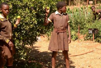 Green Oasis_shule ya msingi ya Sihlengeni_Zimbabwe. Picha: © Sihlengeni Primary School