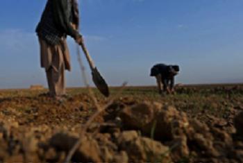 Ukuaji wa uchumi yaleta mwanga Afghanistan licha ya mizozo. Picha: World Bank