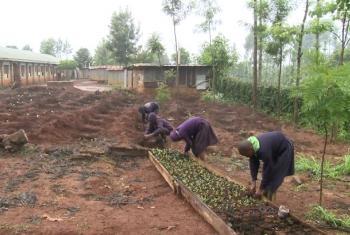 Vijana wakishiriki kilimo nchini Kenya.(Picha:IFAD/Video capture)
