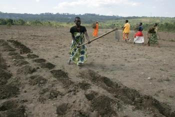 Mwanamke apnda mbegu shambani mwake. Picha: FAO