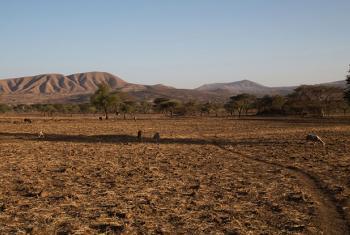 Ukame unaotokana na El Niño umeathiri sana Arsi, Ethiopia mwaka 2016. Picha: OCHA / Charlotte (maktaba)