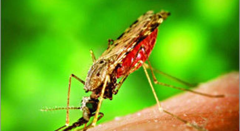 世界卫生组织官网微博图片。