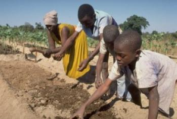 津巴布韦农民在耕种。©农发基金图片/Horst Wagner
