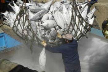 联合国粮农组织图片