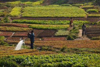 健康的土壤对于粮食保障至关重要,在碳循环中也发挥着重要的作用。粮农组织图片/Olivier Asselin