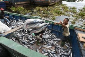 科特迪瓦渔民正在捕捞金枪鱼。粮农组织图片/Sia Kambou