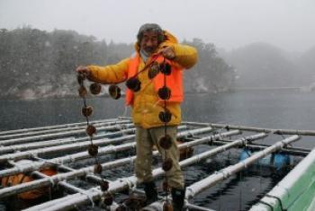畠山重笃站在牡蛎筏上。图片/Mori wa Umi no Koibit