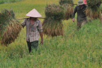 粮农组织图片/Hoang Dinh Nam